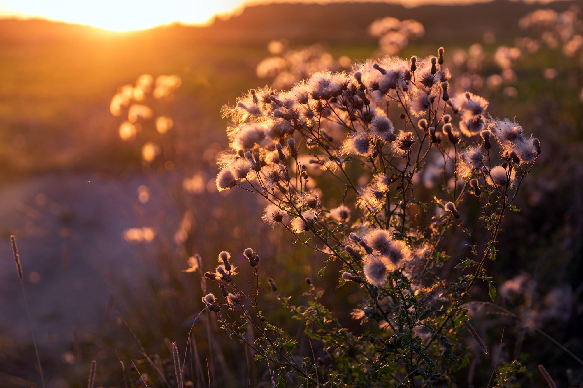 Sunset over the summer meadow